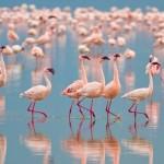 flamingo-group.jpg.adapt.945.1